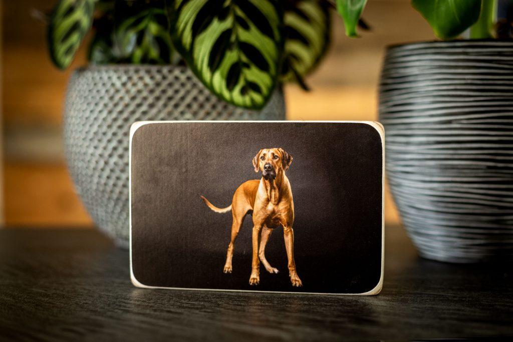 Een mooie eyecatcher dit houten fotoblok