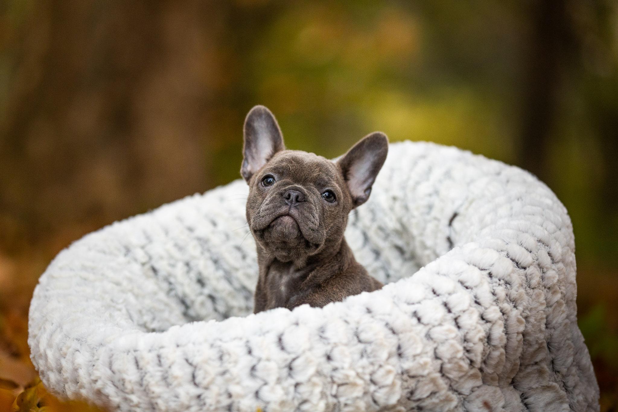 Puppy verdwijnt bijna in zijn grote hondenmand