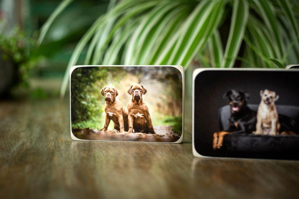 Houten fotoblok geleverd bij een fotoshoot met je hond